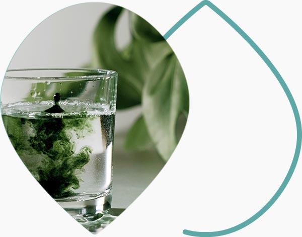 Supplémentation en chlorophylle