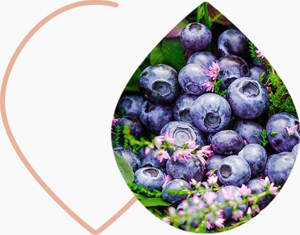 Les flavonoïdes, puissants anti-oxydants