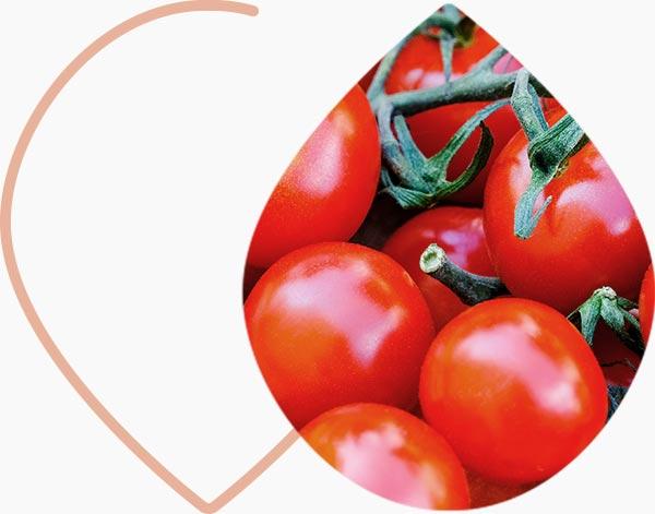 Tomates, naturellement riches en lycopène