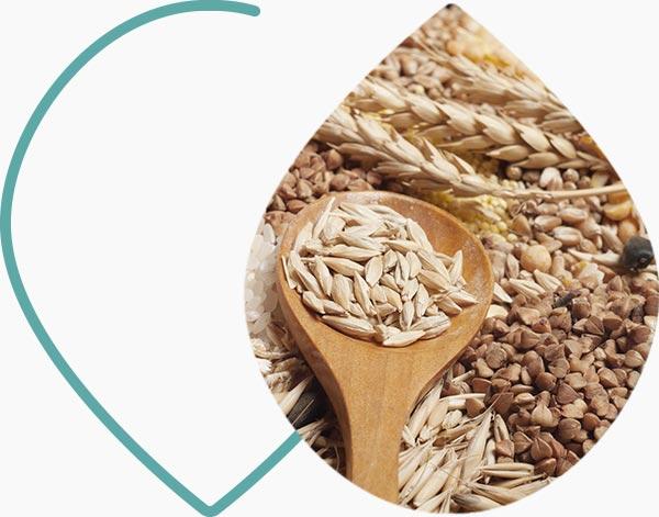 Céréales complètes, riches en manganèse