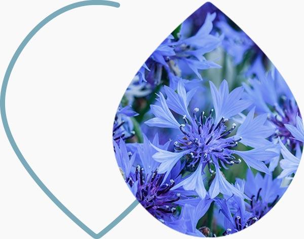 Fleurs de couleurs bleu