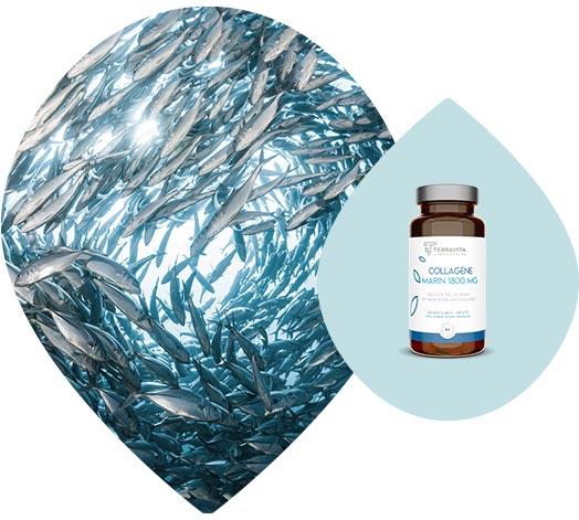 Collagène marin issu de peau et cartilage de poisson