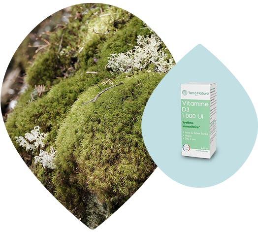 Lichen boréal du Canada